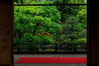 キリシマツツジと新緑の正伝永源院 - 花景色-K.W.C. PhotoBlog