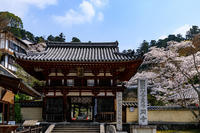 桜咲く奈良2019岡寺にて - 花景色-K.W.C. PhotoBlog