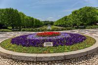 昭和記念公園の花菖蒲 - あだっちゃんの花鳥風月