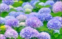 6月の限定お得Day - ボディ&アロマリラクセーション*WONDERLAND 大阪住吉区