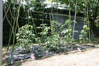 家庭菜園、晩酌枝豆の種まきです。 - 平凡なプリウス乗りの日々