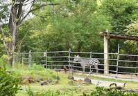 2019年5月天王寺動物園その2フンボ雛体重測定 - ハープの徒然草