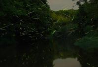 『ホタル』6月10日 - ヤソッチひだまり写真館