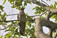 姿を見せない鳥たち~今週のウトナイ湖 - やぁやぁ。