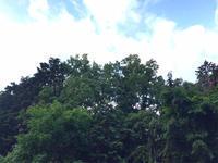 里山の雑木林のオオクワ求めて樹液採集 2019年  vol 1   クワガタは…  part1 - Kuwashinブログ