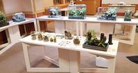 ふなばしアンデルセン公園様でインドアガーデン企画として6月20日(木)まで展示協力をさせて頂いております! - ZERO PLANTS / BLOG