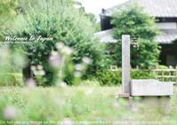 夏、どこもかしこも生き物の気配。小平 江戸東京たてもの園sony α7R III + SEL55F18Z 実写 - 東京女子フォトレッスンサロン『ラ・フォト自由が丘』-カメラとレンズとテーブルフォトと-