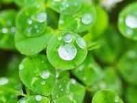 本日は雨上がりですので、 特に午前中は混雑が予測されます。 お時間に余裕をもっていらっしゃるか、 午後は14時から診察いたしますので、 宜しくお願い致します。 - 横浜市南区弘明寺「原整形外科医院」のブログ