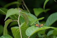 里山のオレンジ - 安曇野の蝶と自然