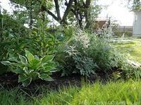 梅雨の庭しごと庭に咲いた低木と宿根草の花 - シンプルで心地いい暮らし