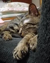 超リラックス - キジトラ猫のトラちゃんダイアリー