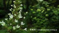 植物園に行く6月-5 - 写楽彩2