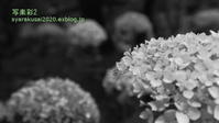 植物園に行く6月-6 - 写楽彩2