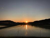 ヨシキリと夕日 - マリカの野草画帖