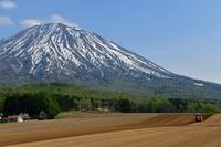 羊蹄山 - Photo Of 北海道大陸
