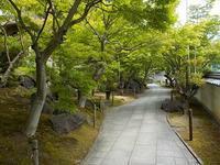 不洗観音寺初夏の風景 - 光匠園の庭造り日記