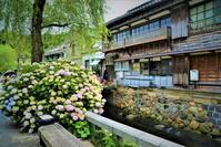紫陽花咲く古い町並み 2 - 天野主税写遊館