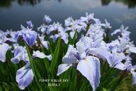 噴水の裏側へ♪ - FUNKY'S BLUE SKY