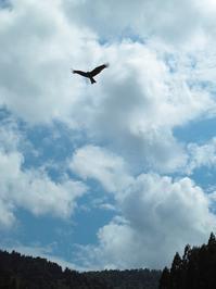 ヒンヤリ、空梅雨・・・コアジサイとウラジロ - 朽木小川より 「itiのデジカメ日記」 高島市の奥山・針畑からフォトエッセイ
