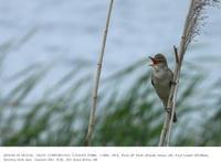 印旛沼北部調整池 2019.5.18(2) - 鳥撮り遊び