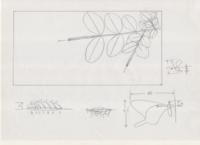 第六作「カラスアゲハ・クマバチ/イボタノキの花」の計画 - むしジオラマ -ほか自分流園芸、自分流工作など-