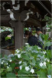 手水舎に咲く - muku3のフォトスケッチ