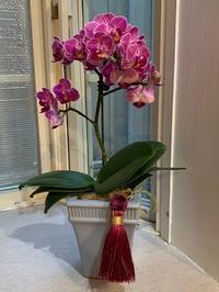 お花に大好きなタッセルが! - ゆうゆう素敵な暮らしの手帖