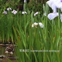 植物園に行く6月-8 - 写楽彩2