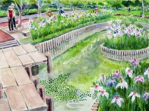 宇土立岡の菖蒲園 -
