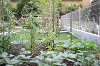 6月の庭と梅仕事 - 普  段  着