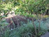 ジャガイモの追肥土寄せ - 畑へ行こう♪