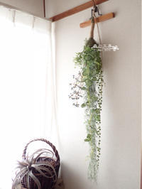 ハンギングプランツご注文品 - 森の工房 Flower Work ナチュラルスローな空間