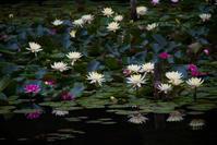 初夏の薫り - ノッツォのホデナス