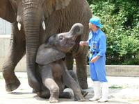 ゾウは勘定に入れません2to say nothing of the elephant - ゾウは勘定にいれません2  to say no thing of the elephant