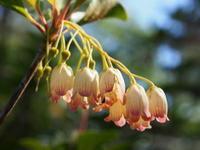 枝の花 - 標高1,100メートルの悦楽