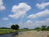 緑の水田 - Magnolia Lane