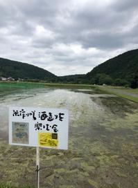 田植えの後 - 無農薬で米作りから酒造りを楽しむ会 blog