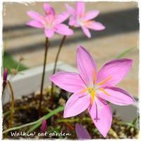 風のお花 - お散歩ねこのお庭