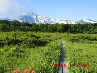 令和元年 6月 13日 (木)桑ノ木台湿原 - 花立の花情報