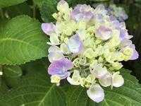 6月のガーデン - 小さな花アトリエ