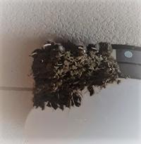 2019つばめの巣Ⅰ - デイジーのひとりごと