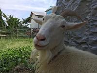 「メイの思い190614」 - 自然卵農家の農村ブログ 「歩荷の暮らし」