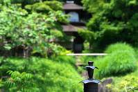 三渓園の花菖蒲と紫陽花No5 - N.Eの玉手箱