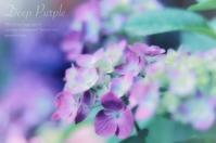 心を込めて花束を - mur mur