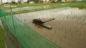 カルガモ農法 -
