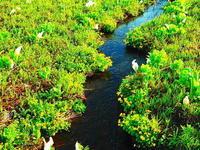 尾瀬ヶ原澄んだ水の潺 - 風の香に誘われて 風景のふぉと缶