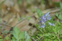 3月の山活⑥**飴と鞭の花の山・大江高山へ - きまぐれ*風音・・kanon・・