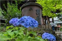 神社の紫陽花 - muku3のフォトスケッチ