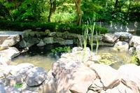 この池には熱帯魚がいます。グッピーでしょうか? - 平凡な日々の中で