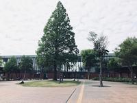 岩見沢駅前通り、再開発/その10 - 『文化』を勝手に語る